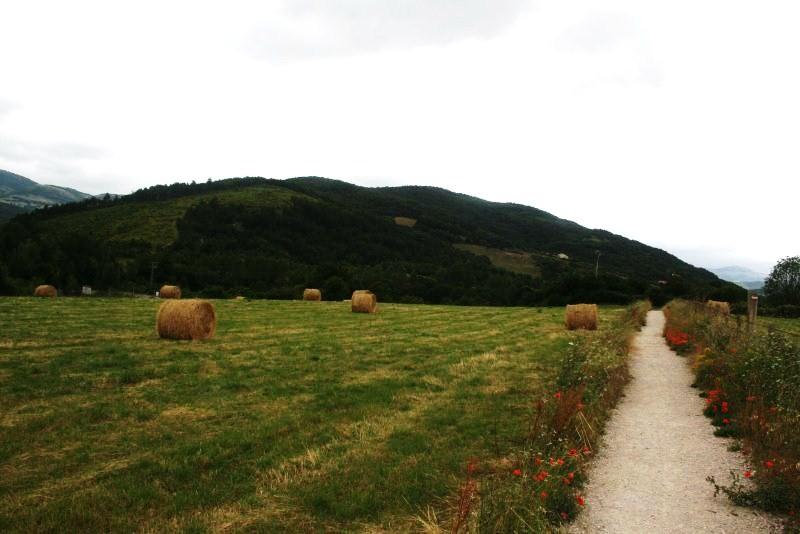 8. Camino - Entre Eskirotz y Larrasoaña_1