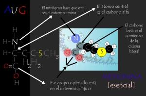 Metionina y su formulación