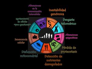 LOS 9 CARACTERES DISTINTIVOS DEL ENVEJECIMIENTO EN LA VIDA
