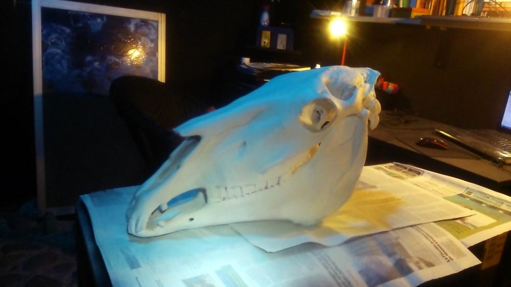 Cráneo restaurado