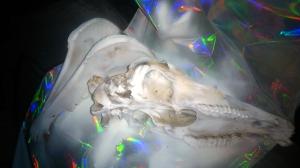 el cráneo en proceso