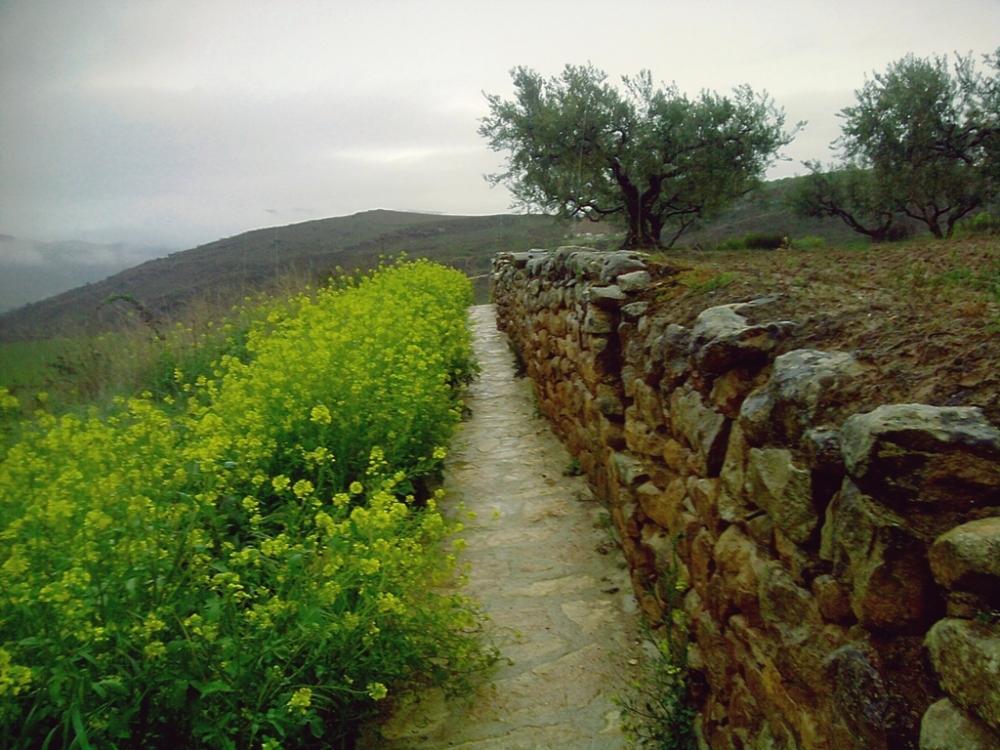 andando por el camino a Cirauqui