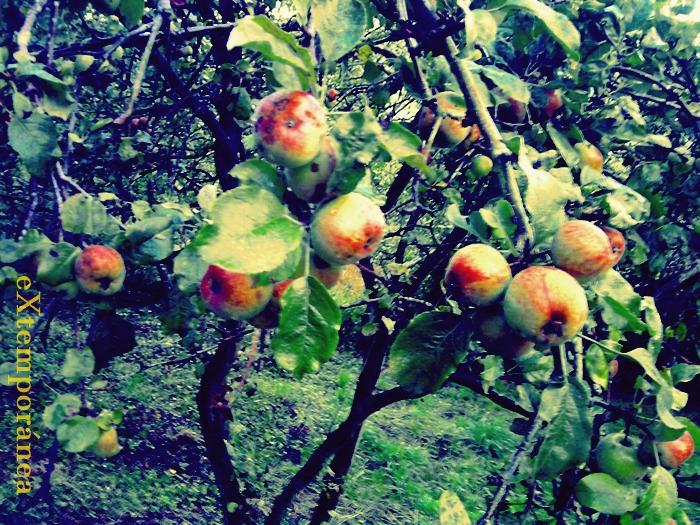 11. del manzano en Orbón
