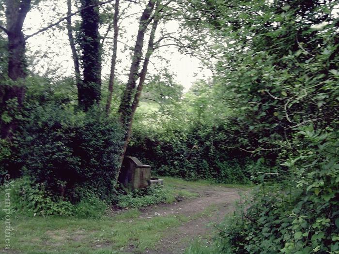 7. De camino a la fuente