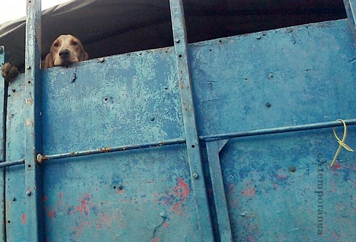 EL perro pasajero