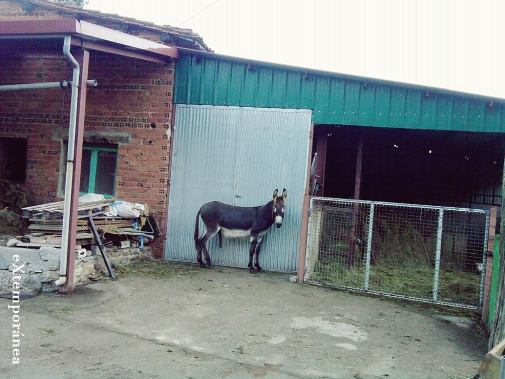 24. Burro en El Cuadro